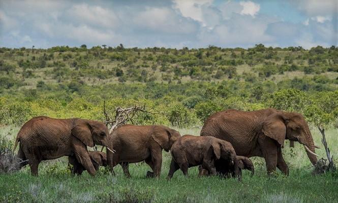 Afričke države bore se protiv COVID-19 s niskim budžetima za zaštitu divljih životinja