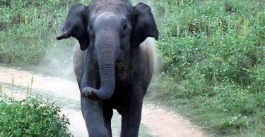 رویای سفر سافاری دارید؟ چگونه یک فیل آشفته را آرام کنیم
