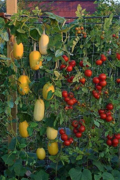 باغ عمودی در بالکن آپارتمانی - ایده هایی برای ایجاد یک پناهگاه سبز