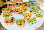Nevis Mango Festival 2020 lanserer virtuelt arrangement