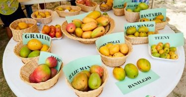 Nevis Mango Festival 2020 رویداد مجازی را آغاز می کند