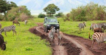 Saksan Afrikan Safari-kiertueen asiantuntijat hakevat matkavaroitusta tuomioistuimen määräyksestä