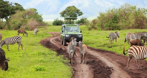 Africa Safari Tour Specialists in Germany Seek Court Order Over Travel Warning