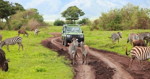 Specialisté na Afrika Safari Tour v Německu Hledají soudní příkaz kvůli upozornění na cestování