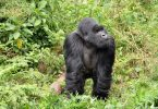 Rwanda Reopening Promotes Domestic and Regional Tourism