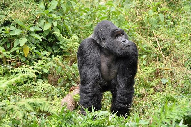 Pembukaan Rwanda Ningkatake Pariwisata Domestik lan Daerah