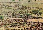 ¿Puede la migración anual de ñus impulsar el turismo nacional?