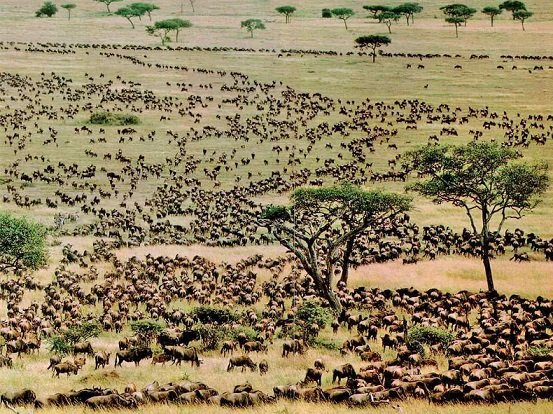 Can the Annual Wildebeest Migration Boost Domestic Tourism?