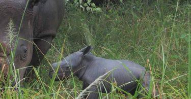 RhinoFundウガンダが新生を祝う