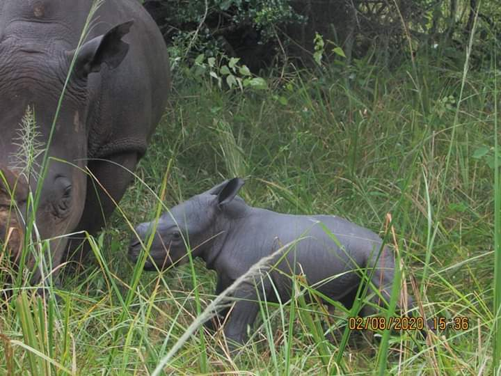 Rhino Fund Ugando festas novan naskiĝon