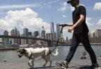 New York City in top ten world's best walking cities