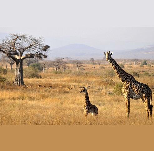 新しいタンザニア野生生物サファリパーク