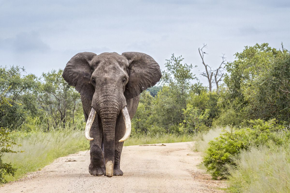 Namibia to sell wild elephants
