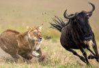 تانزانیا از جذاب ترین مقصد آفریقا نام برد