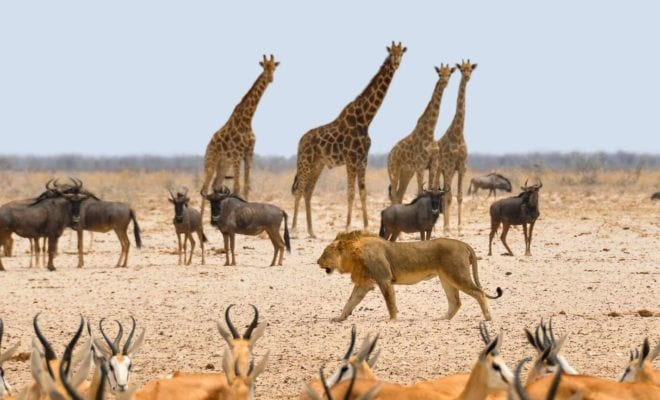 Coronavirus in Africa could reverse 30 years of Wildlife conservation gains