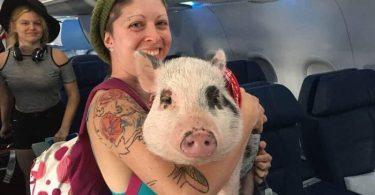 サウスウエスト航空は感情的なサポート動物を禁止します