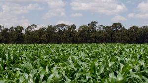 Provivi receives regulatory approval for Pherogen SPOFR in Kenya