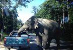 norsu Thaimaa