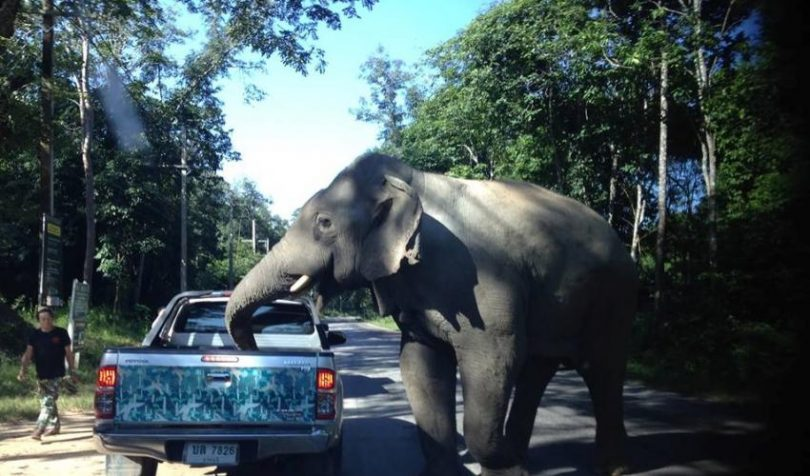 Thailandy elefanta