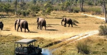 uganda tourism agencies merge