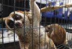 savvaļas dzīvnieku tirgos