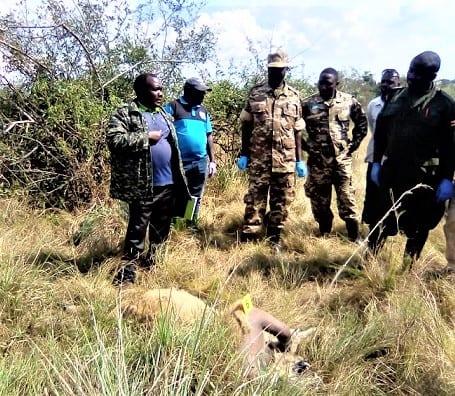 Festgenommen! Uganda Löwenmörder verhaftet