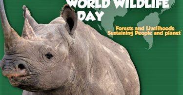 COVID šteti divljini i turizmu Afrike