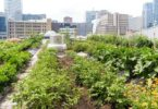 2021 Best US Cities for Urban Gardening Named