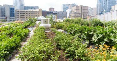 2021 بهترین شهرهای ایالات متحده برای باغبانی شهری به نام