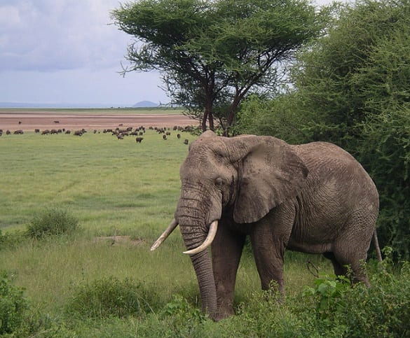 African elephants get more protection: Saving lives and tourism revenue