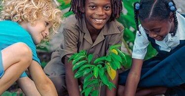 Sandals Resorts intraprende la missione di sostenibilità di 10,000 alberi