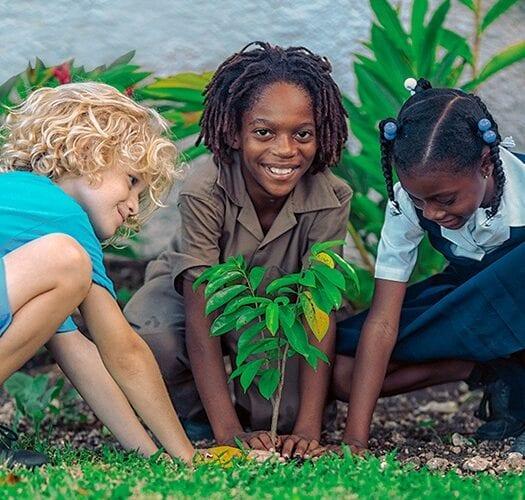 Sandals Resorts embarca em missão de sustentabilidade de 10,000 árvores