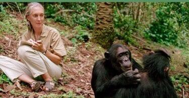 Ko te tohunga rongonui o mua a Jane Goodall te wikitoria mo te Paraihe Temeha nui