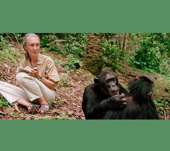 Ferneamde primatolooch Jane Goodall wint ambisjeuze Templetonpriis