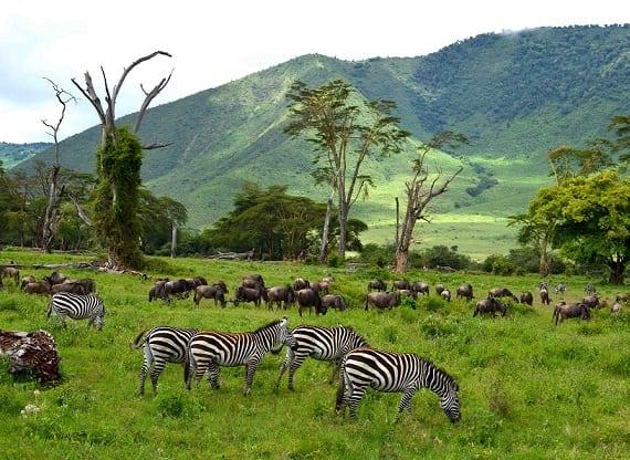 Туроператори Танзанії закликають уряд: Прийняти власників зелених паспортів
