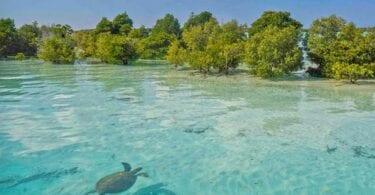 World Oceans Day 2021 – Saving Seychelles' seas