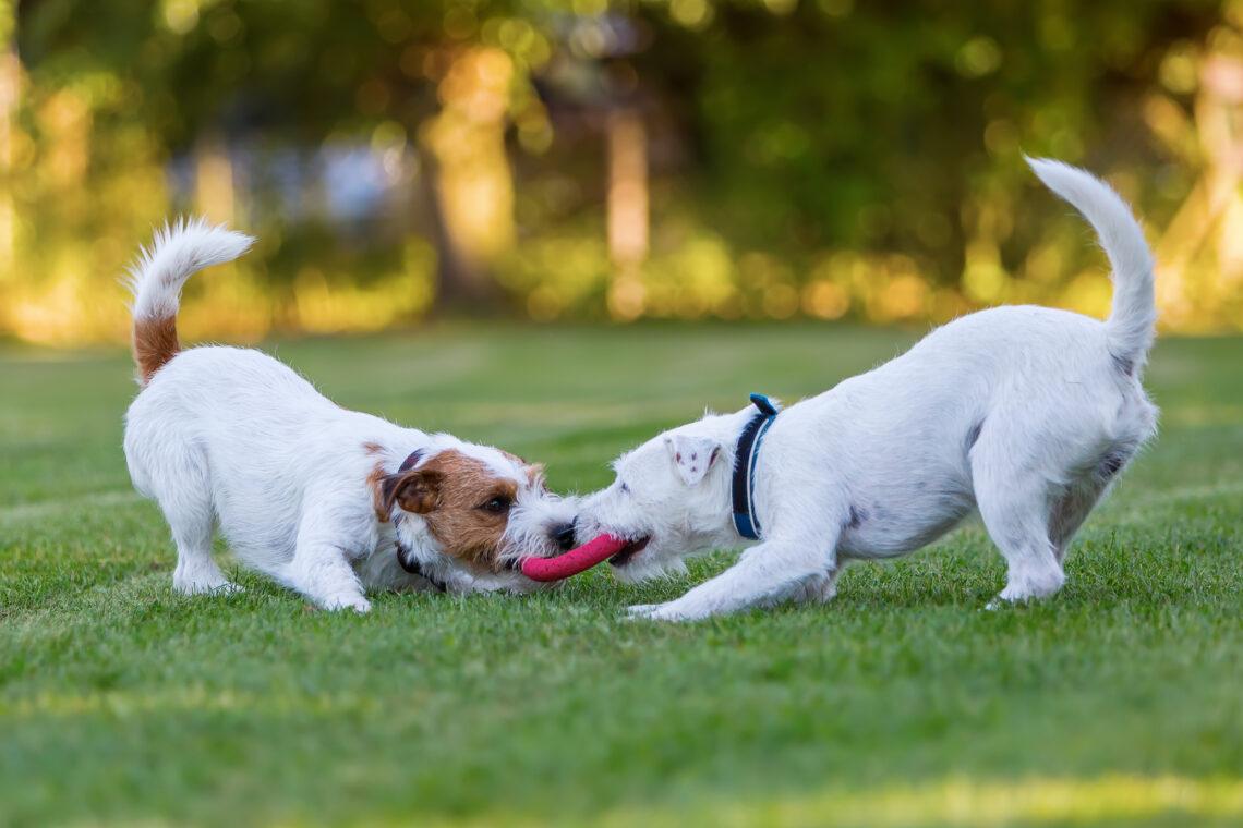 2021 - Melhores cidades com parques para cães nos EUA