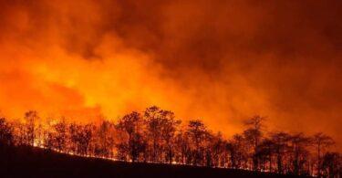 Ryska turister greps i Turkiet för att ha startat skogsbrand.